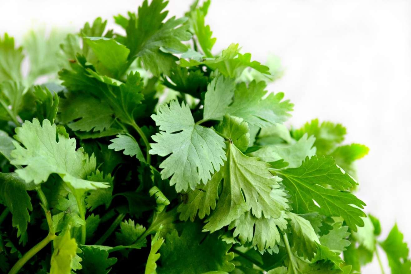 15 Top Rated Herbs for Cleansing the Human Kidney
